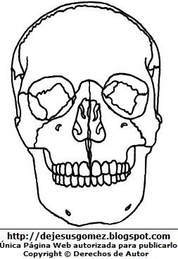 Dibujo de los huesos del cráneo para colorear pintar imprimir. Dibujo de un cráneo hecho por Jesus Gómez