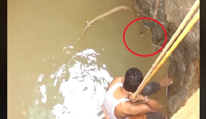 Menegangkan, Pria Ini Selamatkan Kobra dari Dalam Sumur