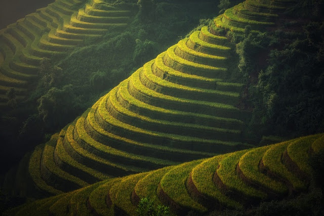 Cultural week honouring Mu Cang Chai terraced paddy fields opens 2