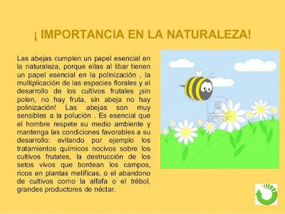 importancia de las abejas