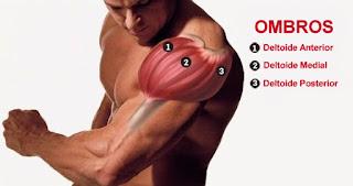 Hipertrofia Muscular - Anatomia dos Ombros