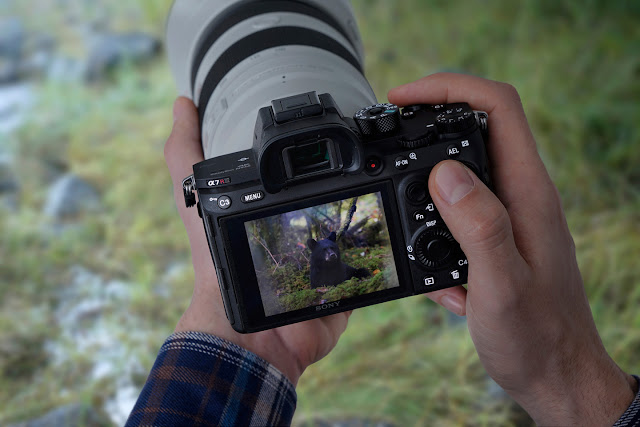 The new Sony a7R III mirrorless camera with a telephoto lens attached in the hands of a photographer looking at an image on the rear screen