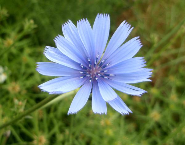 Flores Silvestres De Color Azul Morado Y Lila