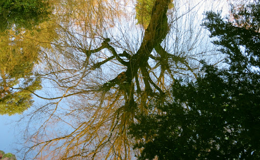 A little frost and blue sky (A Coombe Wood walk)