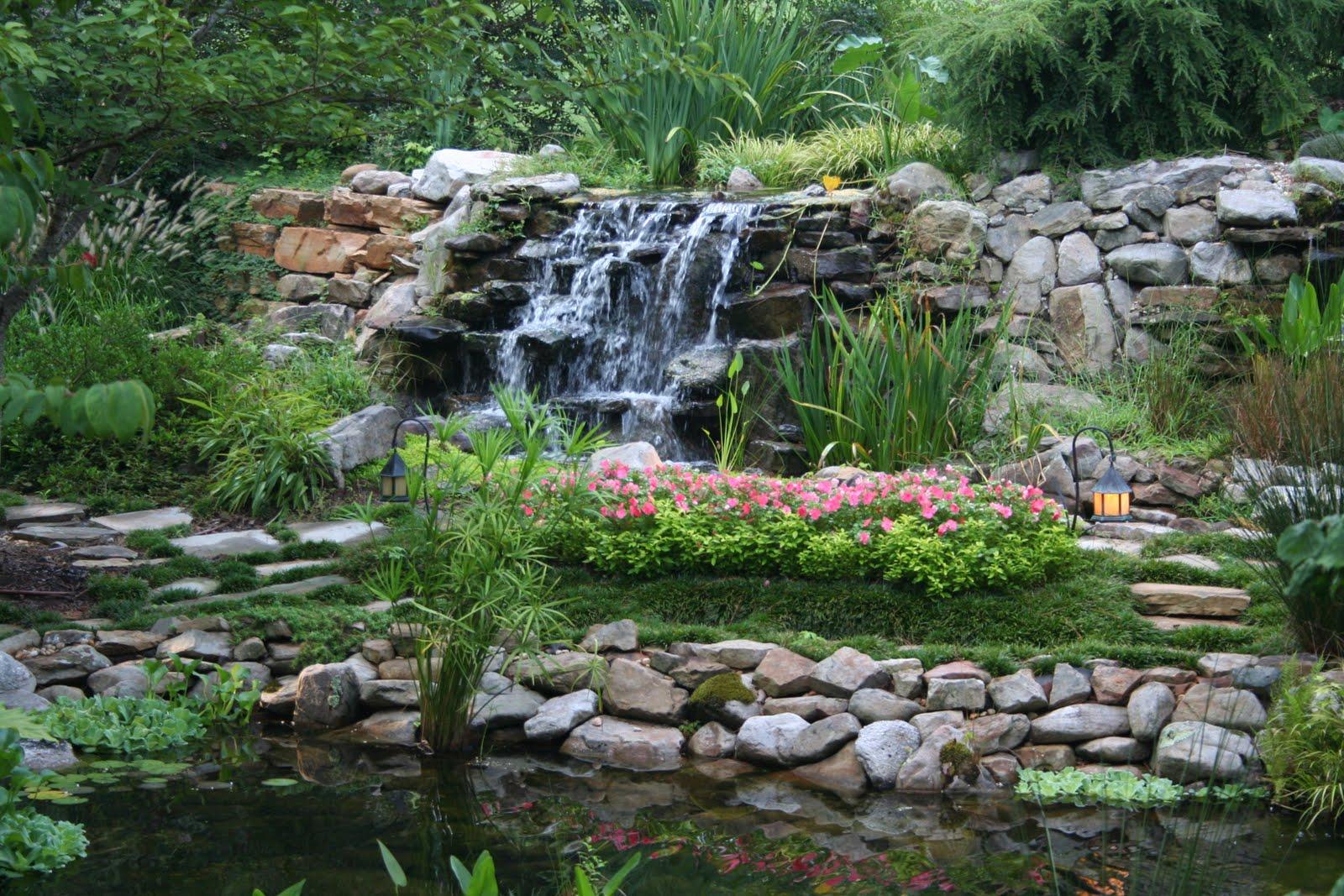 A chef in the garden august garden photos for Koi pond waterfall