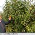 Dupa 20 de ani de cercetări, intră în sfârșit în producția de masă PLANTA VIITORULUI din Buzau