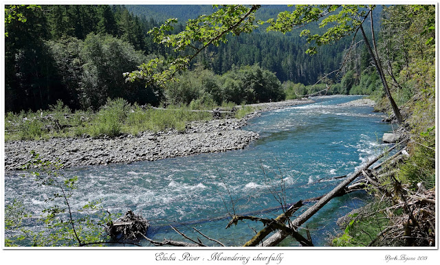 Elwha River: Meandering cheerfully