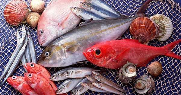Phân biệt cá biển sạch và cá bị nhiễm độc qua một số đặc điểm