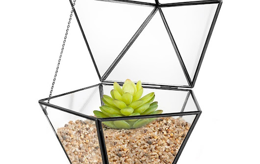 Produce your Specific Captivating Forest With the Terrarium