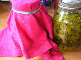 lacto-fermented dandelion soda