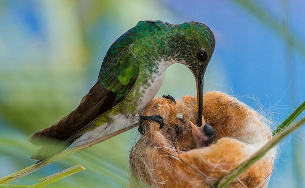 Resultado de imagem para imagens de passarinhos