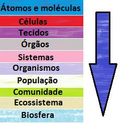 Manual de Estudos: Biosfera, vida e organização biológica