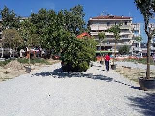 Φυτεύουν δέντρα στην Πλατεία Δημοκρατίας (Ευκαρπίδη) στην Κατερίνη. (ΦΩΤΟ)