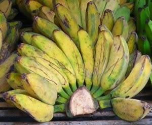 pisang kepok bahan goreng pisang keju crispy