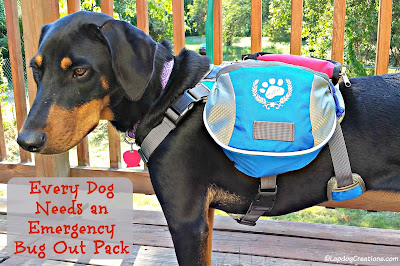 doberman mix puppy wearing backpack