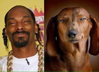 Perros que se parecen a sus dueños famosos - Snoop Dog
