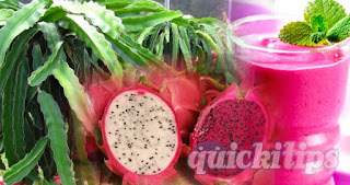 Interesting information about dragon fruits and dragon fruit cultivation