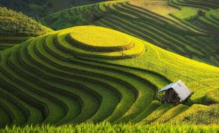 Zakat Pertanian Dilakukan Setelah Bayar Hutang