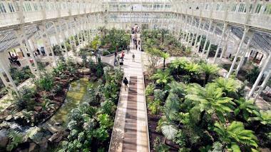 Temperate House, el invernadero más grande del mundo y sus plantas de regiones templadas