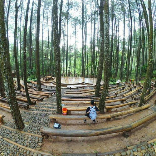 Tinuku Open air theater in Mangunan pine forest constructed adjust sloping contours and without removing trees