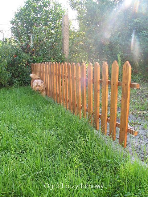 płotek w warzywniku, ogród przydomowy, ogród za grosze, dekoracja ogrodowa