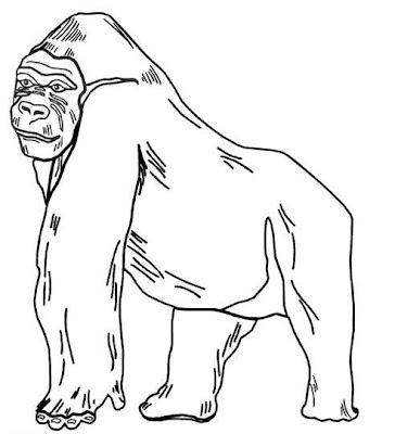 La Chachipedia Orangutanes Gorilas Y Monos Para Colorear