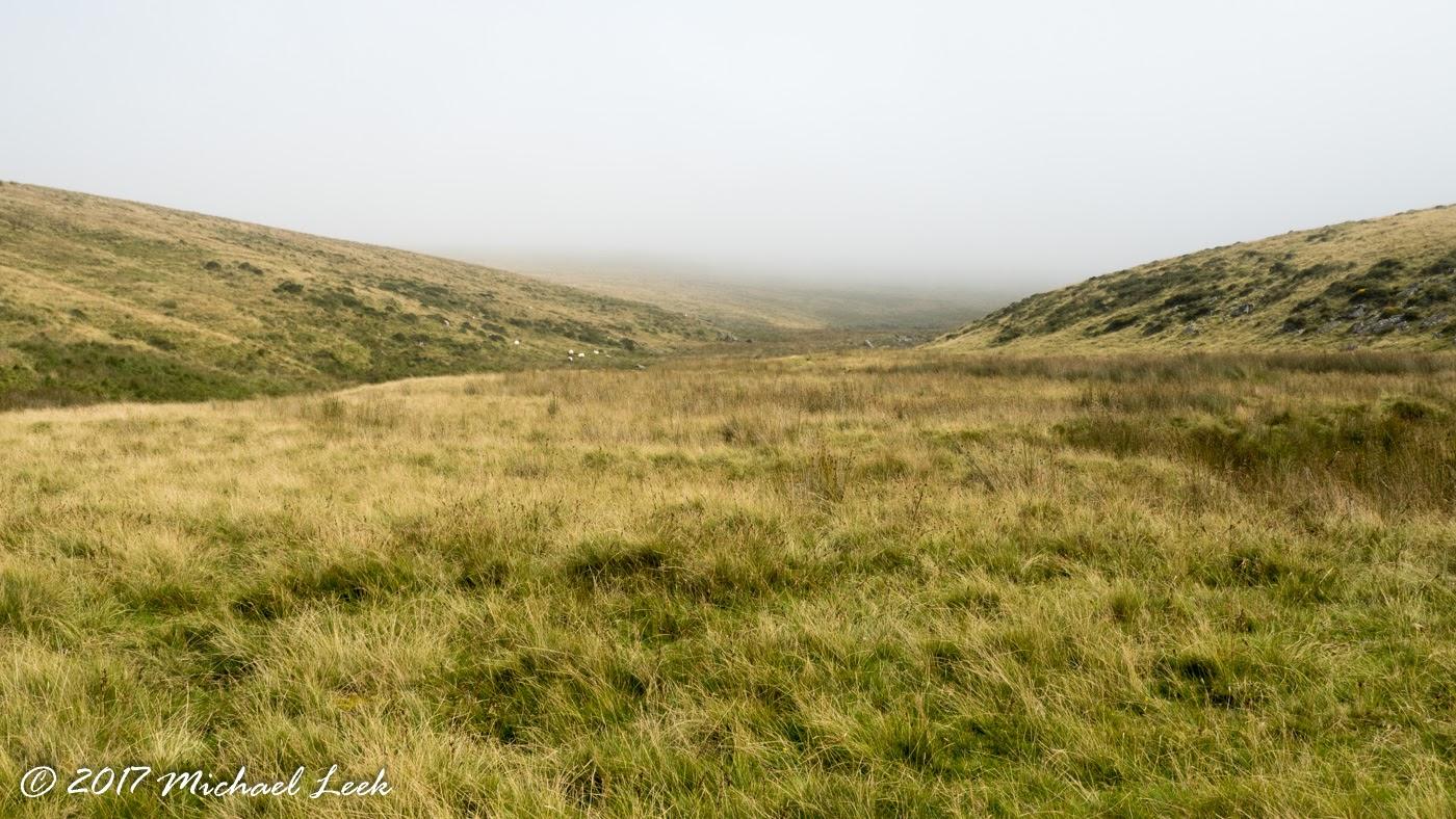 Dartmoor Walks With Dogs