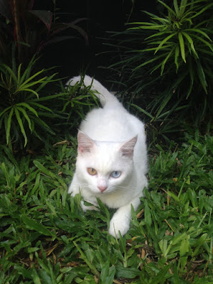 aide leit-lepmets indoneesia kass inspiratsioon