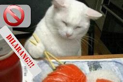 10 Makanan manusia yang berbahaya bagi hewan peliharaan