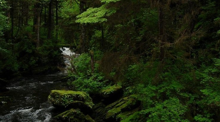 With Amazon Burning, Trump Is Opening Alaskan Rainforest To Corporate Exploitation