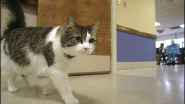 MYSTERIES AND CONSPIRACIES: The paranormal cat - Oscar