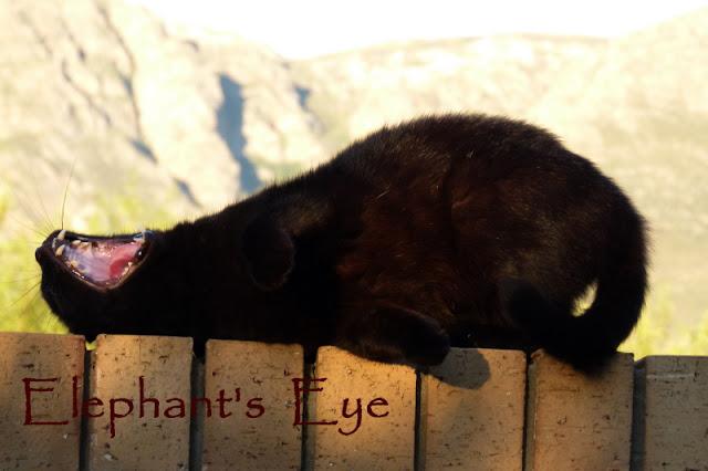 Chocolat and Elephant's Eye by Jurg