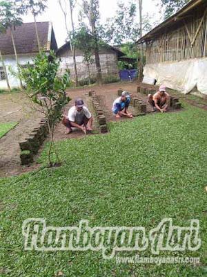 Jasa Tukang taman Surabaya Jual Tanam Rumput Gajah Mini