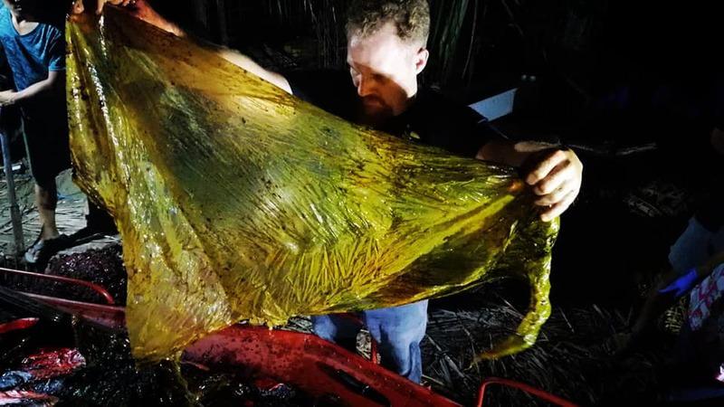Plástico encontrado dentro da baleia