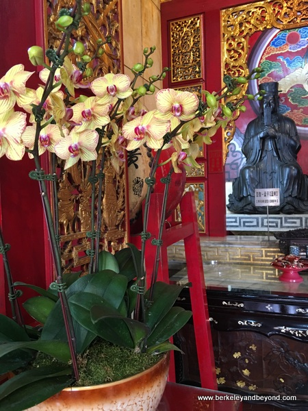 orchids in Confucius Hall at Wenwu Temple at Sun Moon Lake in Taiwan