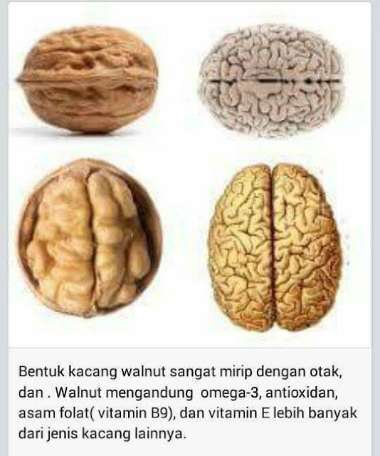 Kacang yang Menyerupai Otak