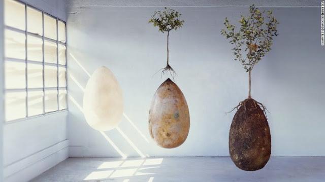 Urna funeraria como un huevo... para que vuelvas al origen