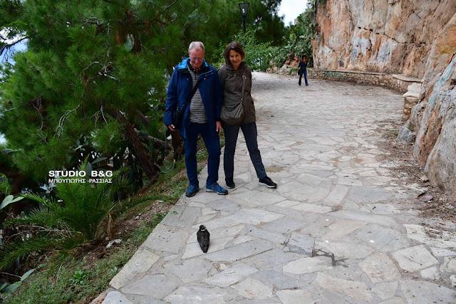 Δανοί τουρίστες έσωσαν τραυματισμένο γεράκι στο Ναύπλιο (βίντεο)