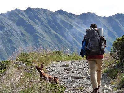 Tour du Mont Blanc chien pinscher 犬とテントでツール・ド・モンブラン