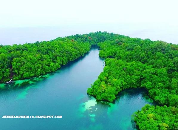 Mengeksplor Pesona Danau Kakaban, Danau Ubur-Ubur Kepulauan Derawan Kalimantan Timur