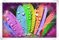 Beautiful-seven-colors-flowers-wallpaper-1920x1200_meitu_1_meitu_2.jpg