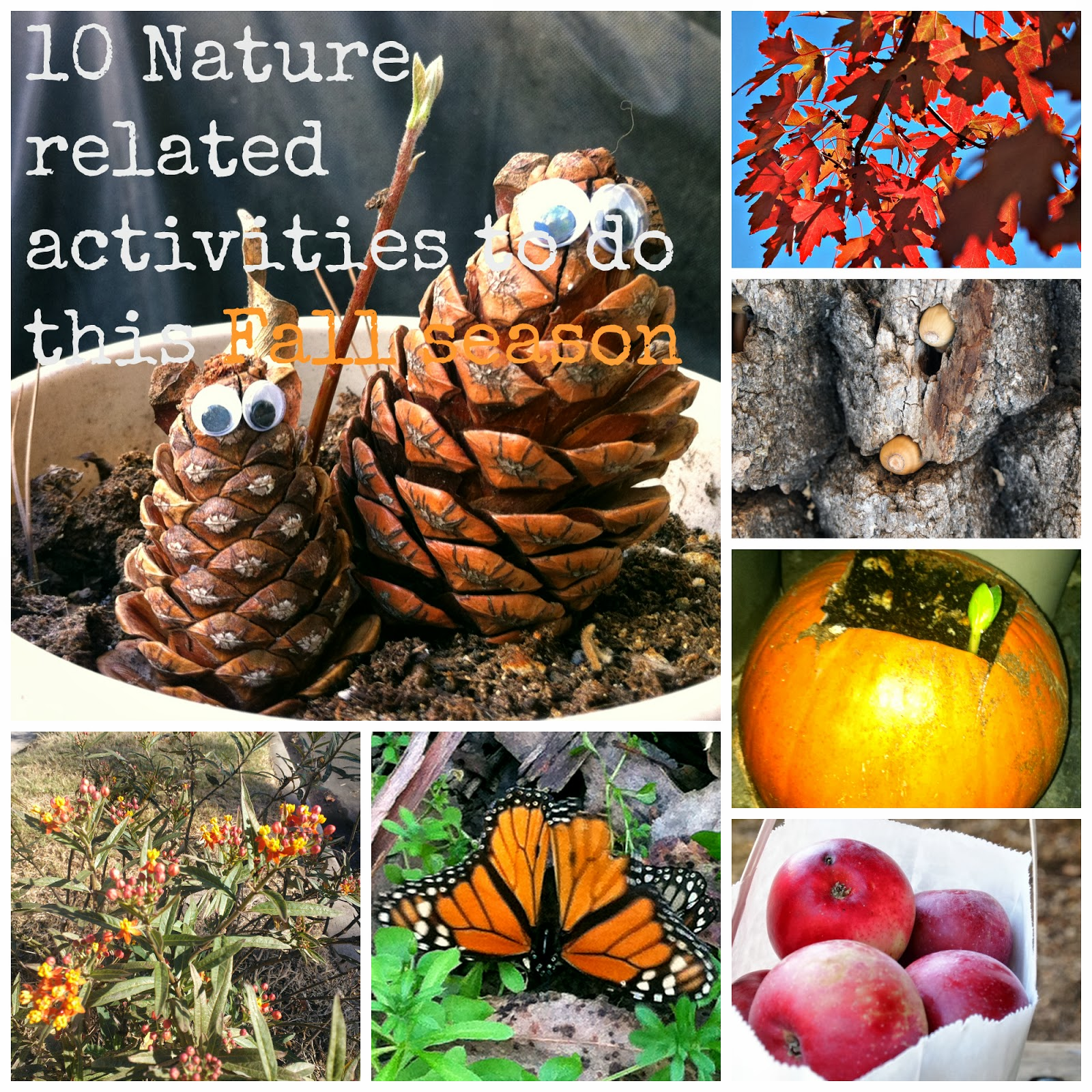 collage of dreams 10 nature related activities to do this fall season. Black Bedroom Furniture Sets. Home Design Ideas