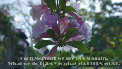 Good Morning Quotes with Flower