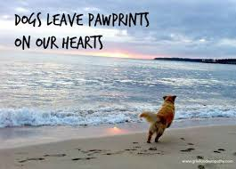 Comforting Quotes About Losing A Dog Doglopedix