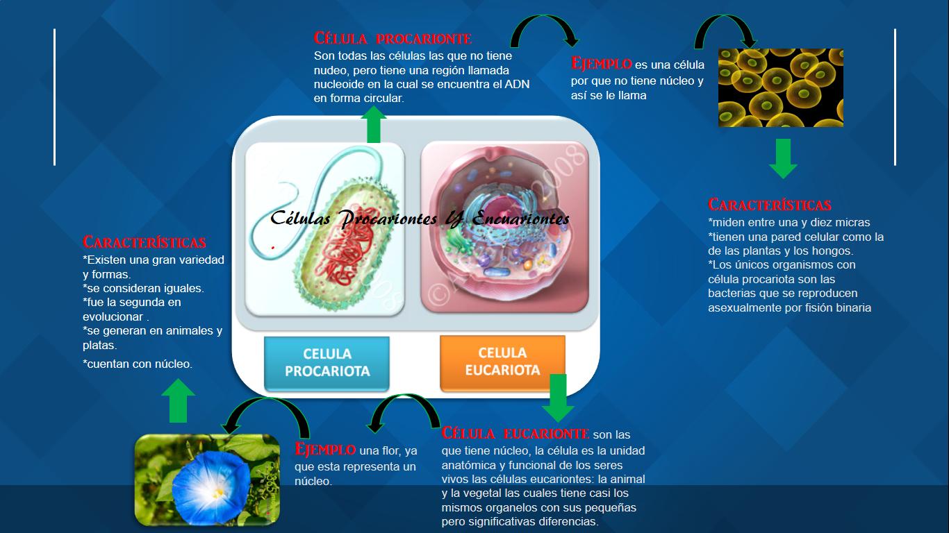 Libreta de bilogia: Mapa mental 6 celulas procariontes y eucariontes.