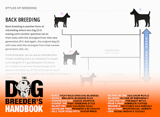 backbreeding, og breeding, dog breeding business, dog breeding guide, start a dog breeding business