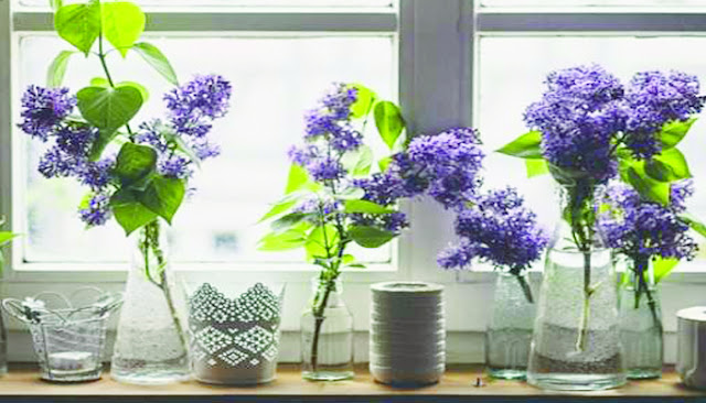 जरूरी है घर को महकाए रखना, लगाएं गुलाब,मोगरा जैसे फूल ये देंगे ताजगी का एहसास