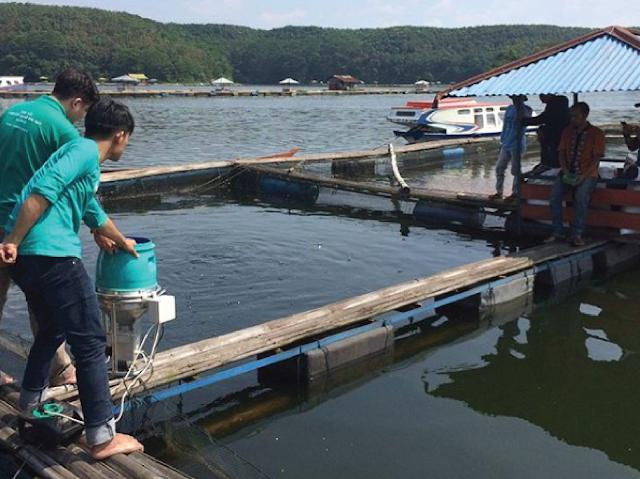 Produk eFishery sangat bermanfaat bagi peternak ikan