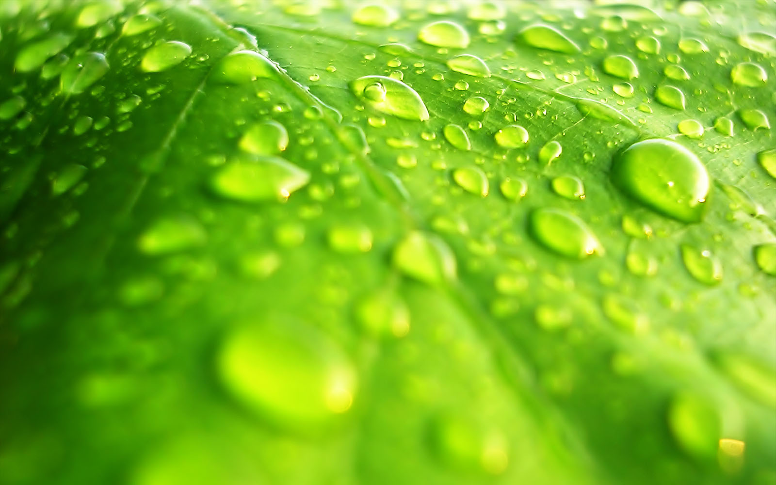 Water Drops on Leaf Wallpapers