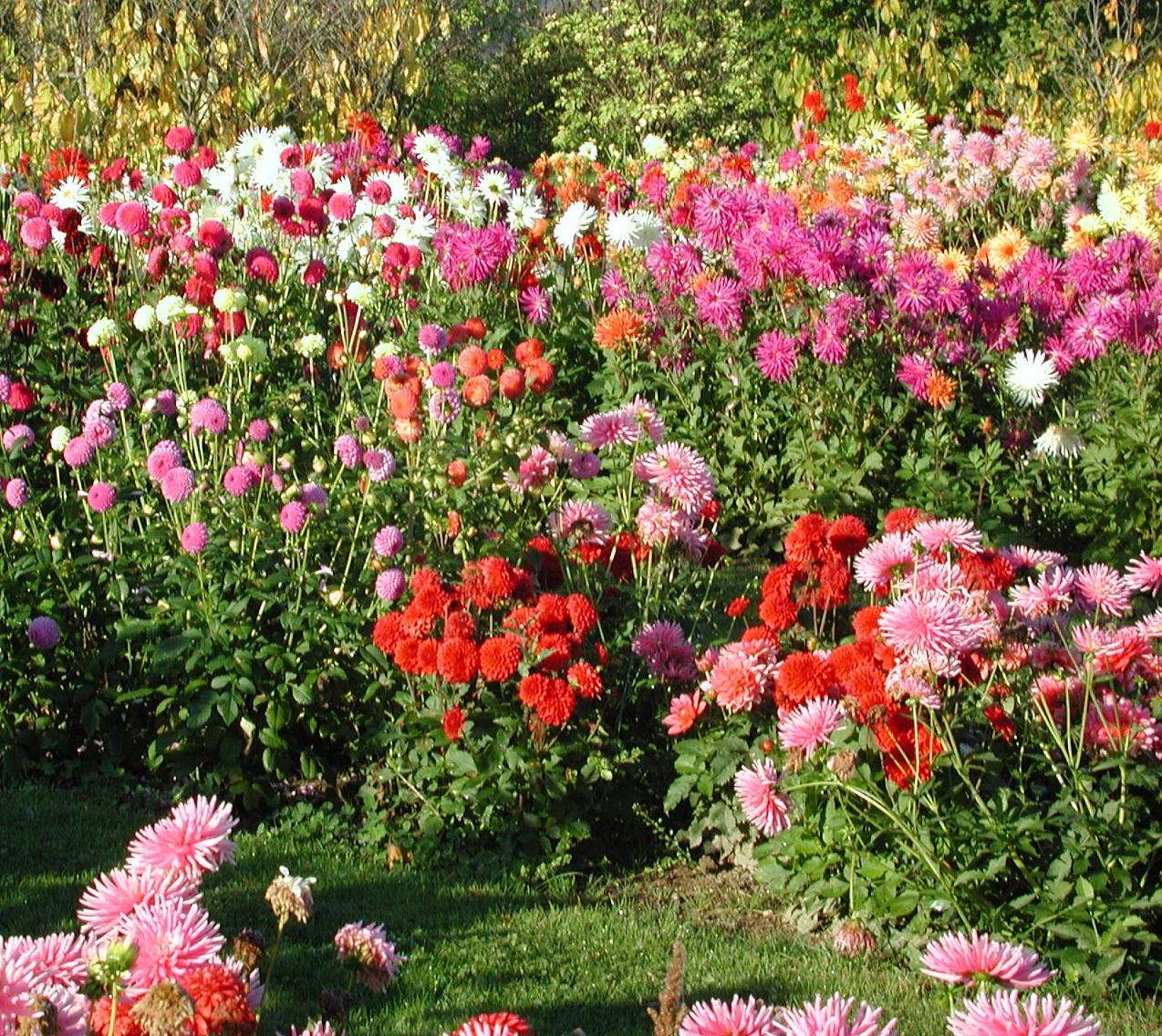 bulbe a floraison estivale